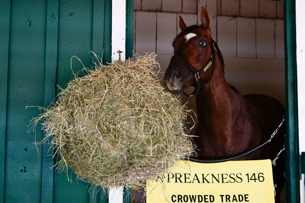 Crowded Trade stands in the stall at Pimlico Race Course.
